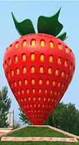 中国草莓之乡——河北省保定市满城区