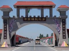 中国蟠桃之乡——新疆一四三团