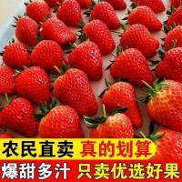 草莓新鲜现摘孕妇水果应季奶油草莓烘焙红颜99牛奶大草莓